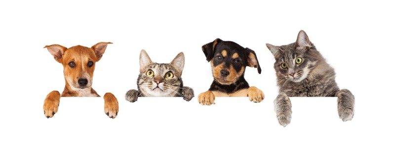cute-dogs-and-cats-800x296